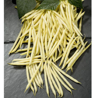 Goldilocks Bean Seeds (Phaseolus vulgaris)