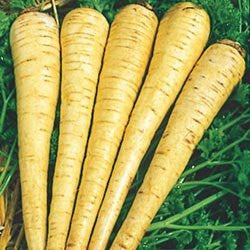 All American Parsnip Seeds