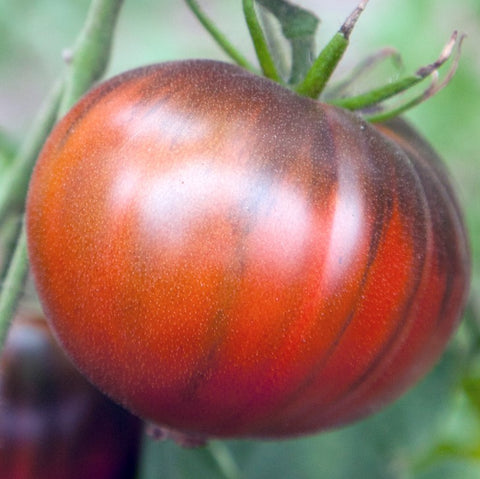 Black Sea Man Tomato Seeds
