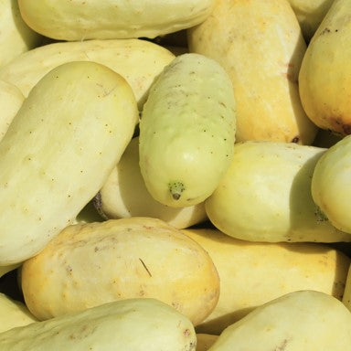 Boothby's Blonde Cucumber Seeds