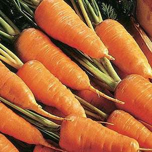 Chantenay Red Core Carrot Seeds