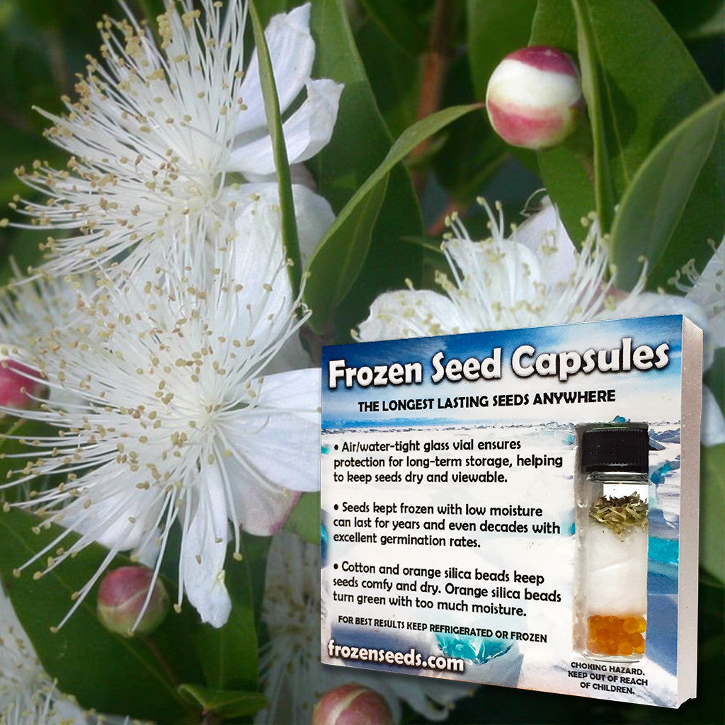Greek Myrtle Seeds (Myrtus communis) + FREE Bonus 6 Variety Seed Pack - a $30 Value!