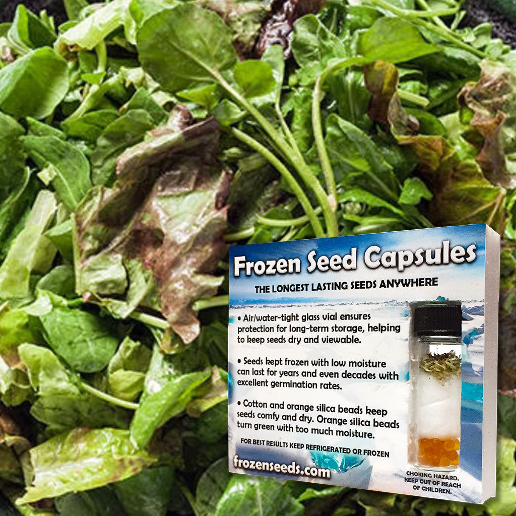 Mixed Cooking Greens Seeds + FREE Bonus 6 Variety Seed Pack - a $30 Value!