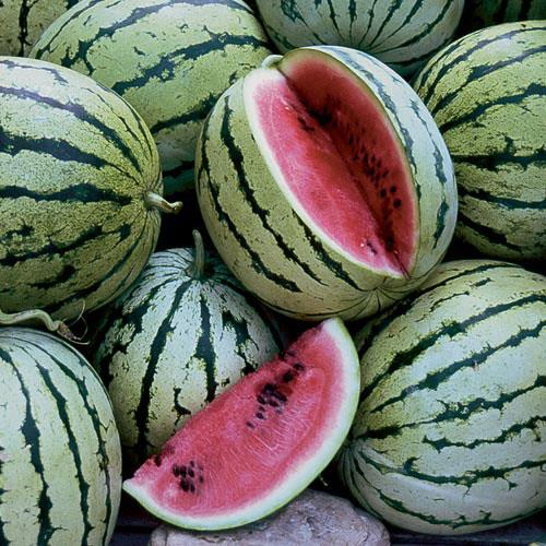 Chris Cross Watermelon Seeds