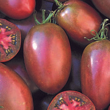 Purple Russian Tomato  Seeds + FREE Bonus 6 Variety Seed Pack - a $30 Value!