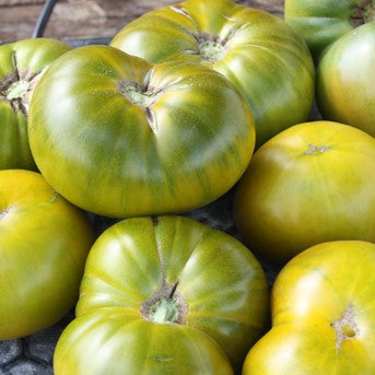 Emerald Evergreen Tomato Seeds