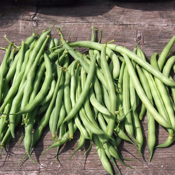 Old Homestead Kentucky Wonder Pole Bean Seeds