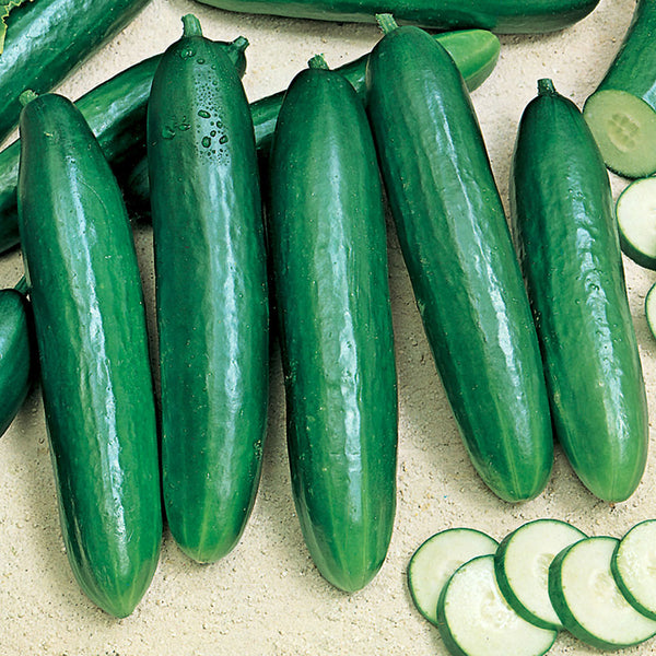 Beit Alpha Cucumber Seeds