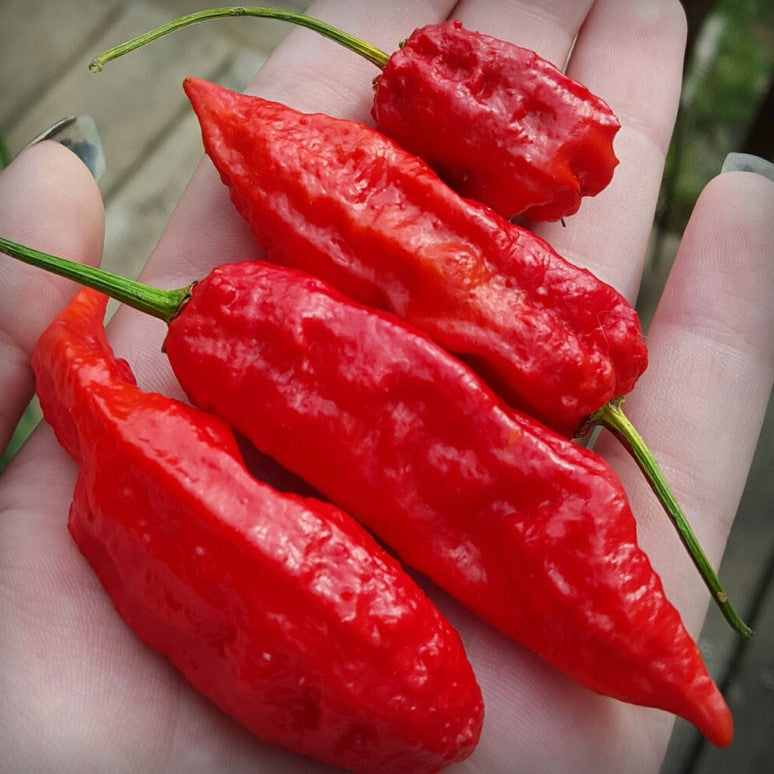 Bhut Jolokia Hot Pepper Seeds
