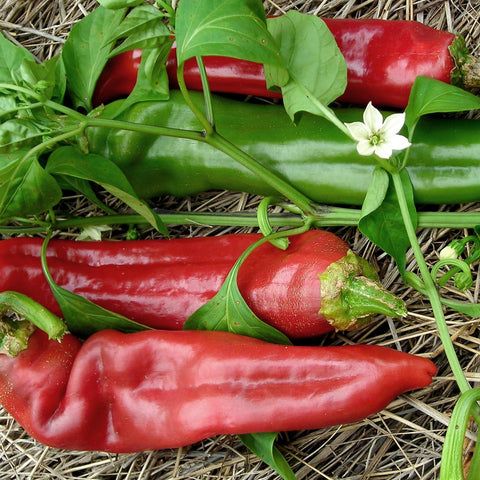 Big Jim Chili Pepper Seeds