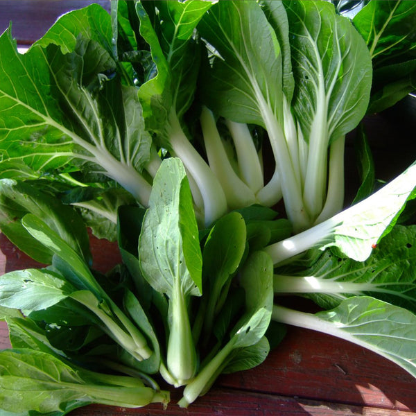 Ching Chang Bok Choy Seeds