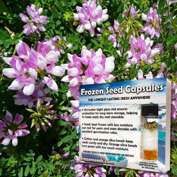 Crown Vetch Seeds (Coronilla varia) + FREE Bonus 6 Variety Seed Pack - a $30 Value!