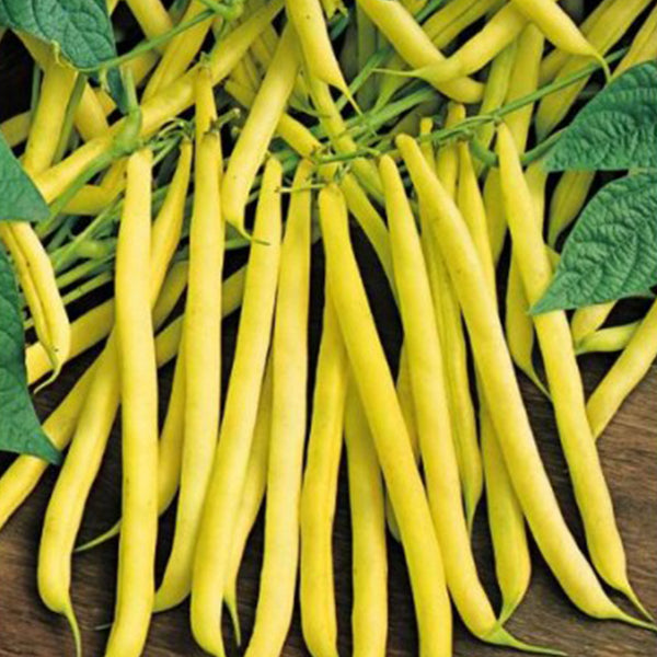 Golden Wax Bush Bean Seeds