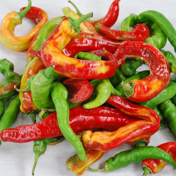 Italian Pepperoncini Pepper Seeds