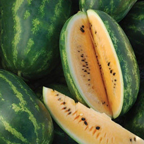Orange Flesh Tendersweet Watermelon Seeds