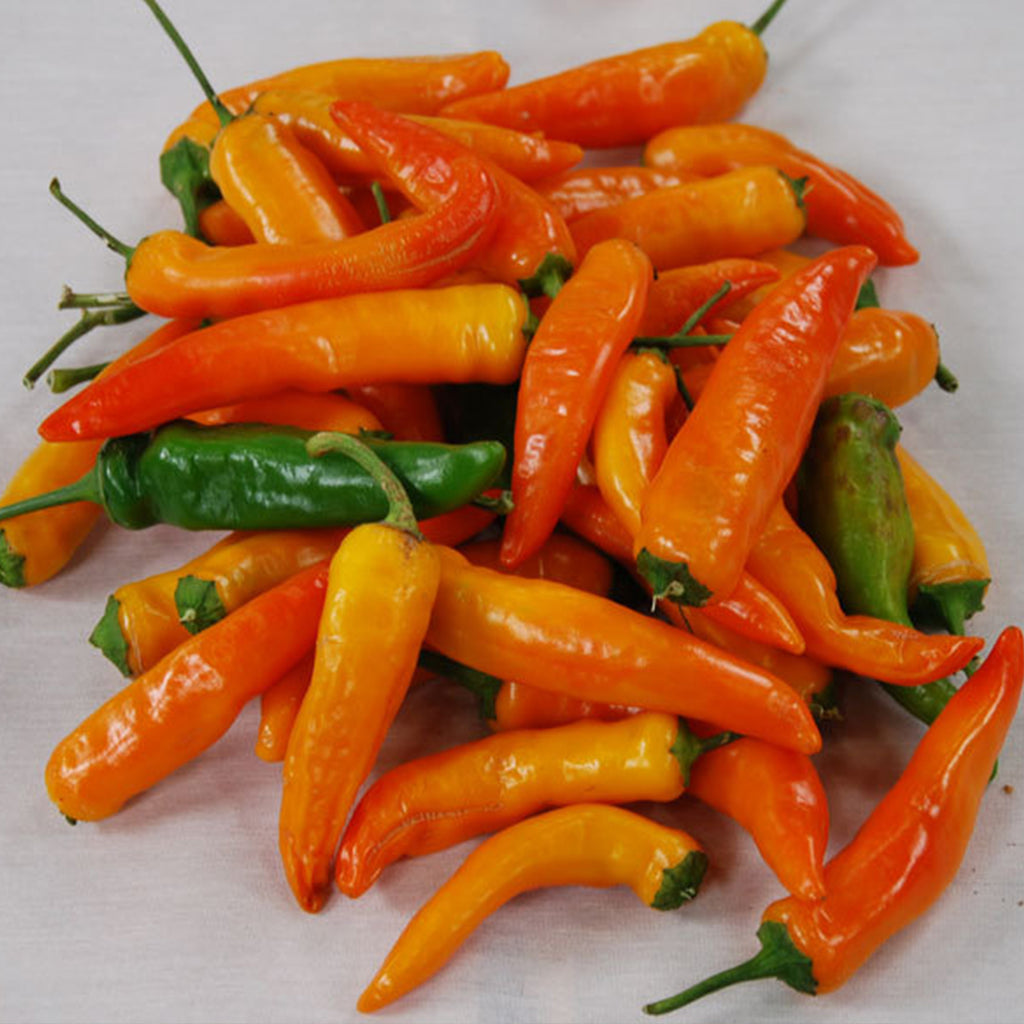 Tequila Sunrise Pepper Seeds