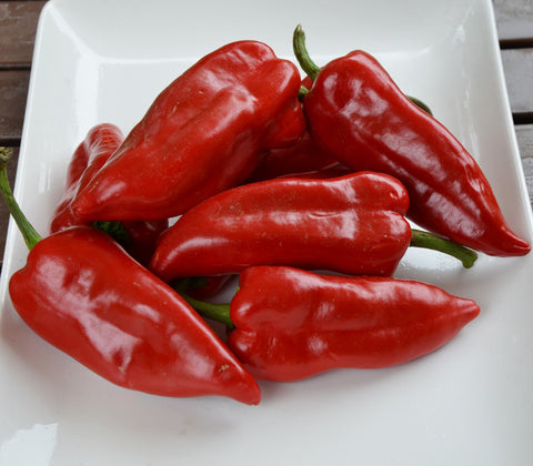Piquillo Pepper Seeds + FREE Bonus 6 Variety Seed Pack - a $30 Value!