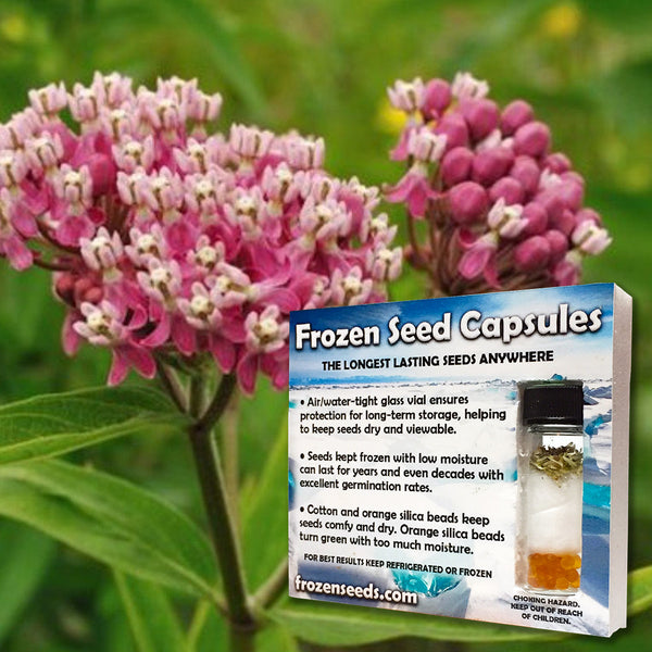 Swamp Milkweed Seeds (Asclepias incarnata) + FREE Bonus 6 Variety Seed Pack - a $30 Value!