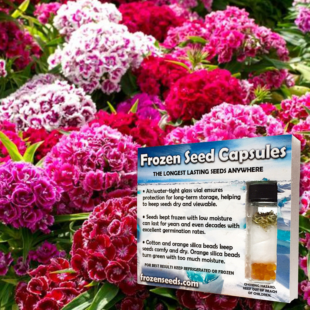 Sweet William Seeds (Dianthus barbatus) + FREE Bonus 6 Variety Seed Pack - a $30 Value!