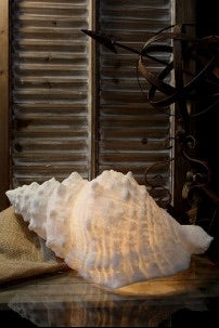 Large Shell Lamp