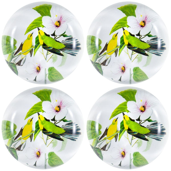 Blue-Winged Warblers In Branches Set Of Four Crystal Magnets