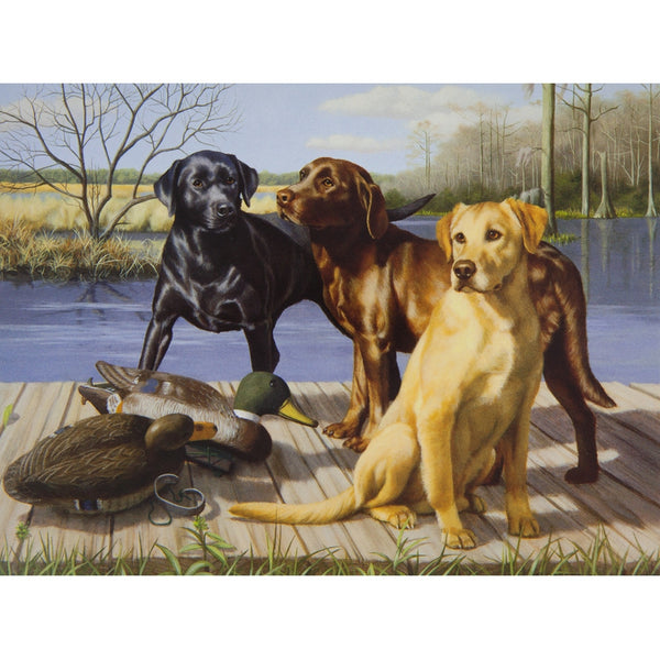 Three Labrador Retreivers Birthday Greeting Card