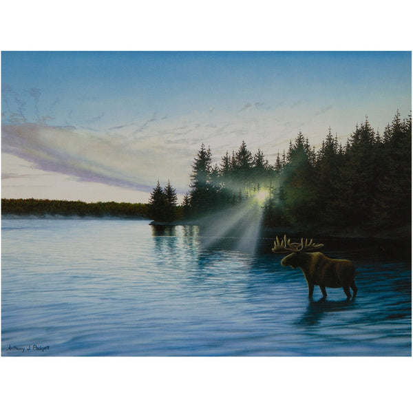 Moose In The Lake Blank Greeting Card