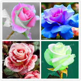 100 Pcs Rose Seeds - SALE LAB