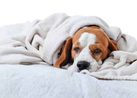 your dog didn't get enough physical and mental exercise which might lead to boredom