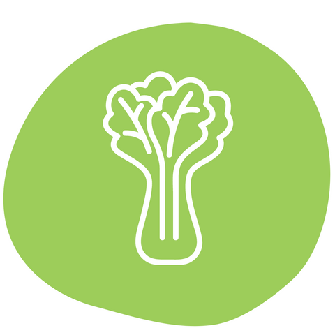 celery healthy vegetable for dogs