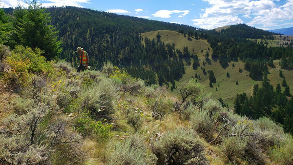 Gaia Metals makes gold-silver discovery at the Freeman Creek, Idaho