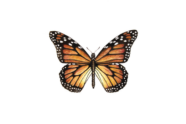 Monarch Butterfly Paintable Project Digital Download