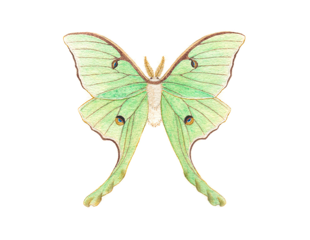 Luna Moth Paintable Project Digital Download