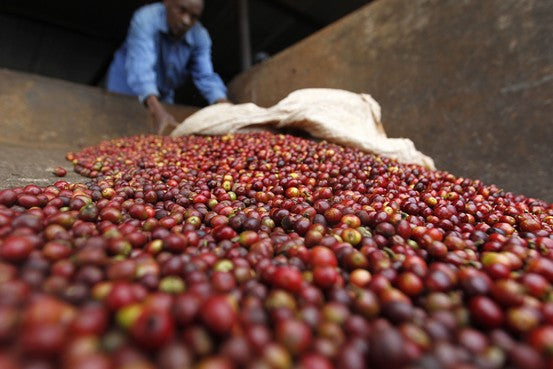 The Story of Kaffa: Origins Of Coffee