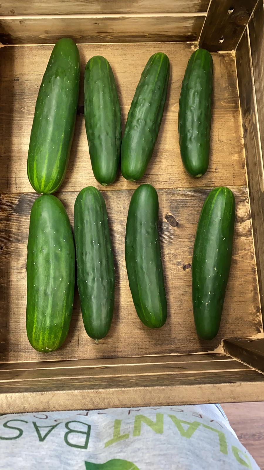 Large Local Cucumbers