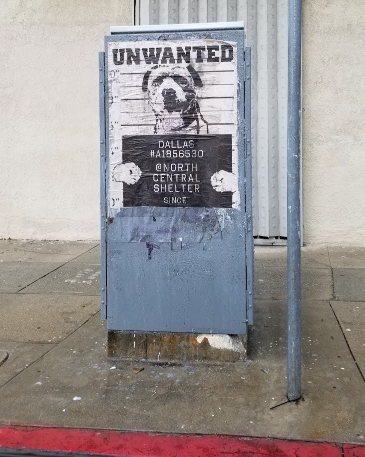 Dallas - Unwanted Dog NewsPrint