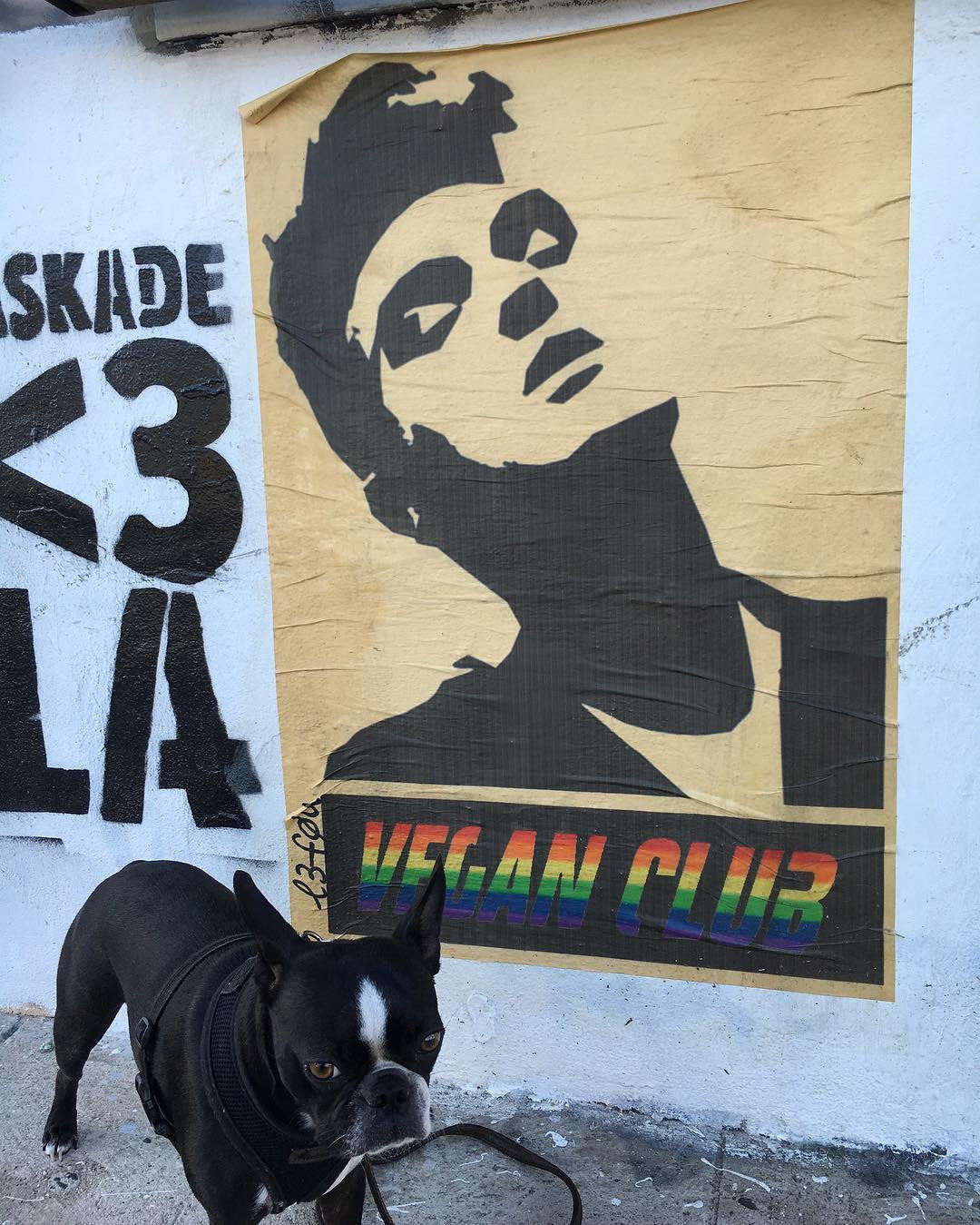 Street Art NewsPrint Poster with Rainbow Vegan Club feat. Morrissey Signed L3f0u @dinorachelle @haperleescorsese & @eldevo_