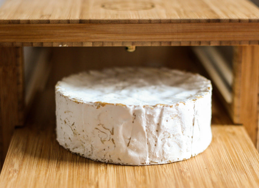 [Video] How to ripen Robiola and Bloomy Rind Cheeses to perfection
