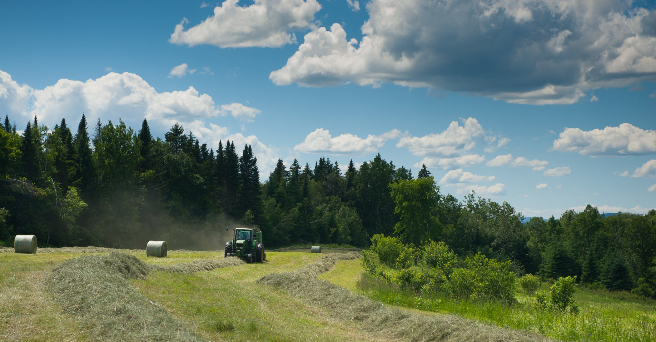 harvesting hay for dairy cattle feed