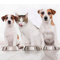 Switching your dog or cat to a plant-based diet is easy. Get to start vegan pet food get one of our sample. Very important to transit gradually, as it will give the body the time it needs to adapt to the new food. Once the transition is complete, you will