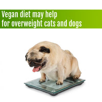 Vegan diet may be the solution for overweight Cats and Dogs