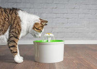 How to Prevent Urinary Tract Infections in Cats and Dogs