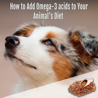 How to Add Omega-3 acids to Your Animal's Diet