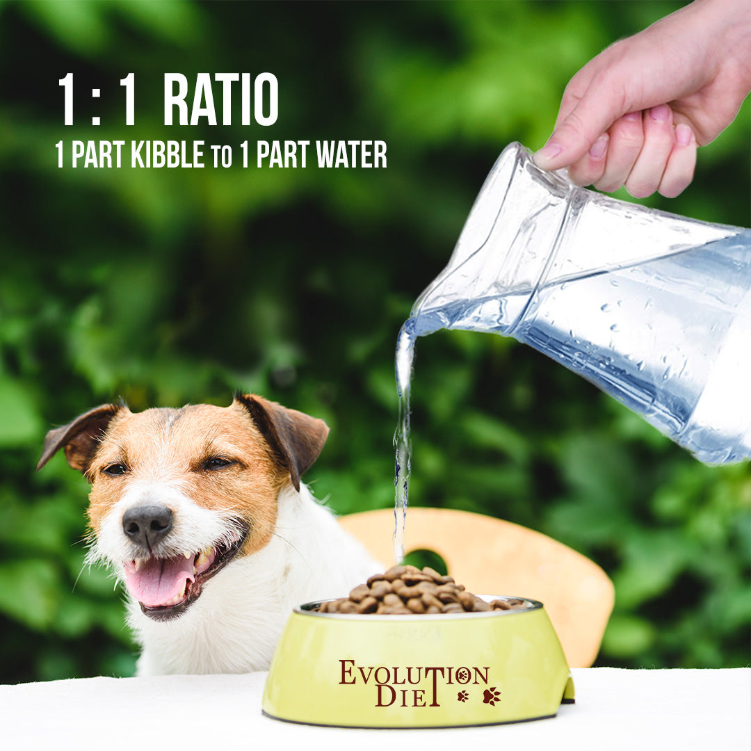 add water to vegan dog food for proper hydration