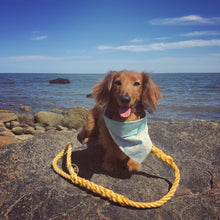 The Teal Tangle Leash