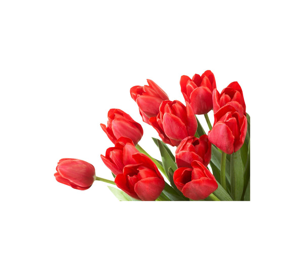 Red Corner Tulips Large Wall / Appliance Decal
