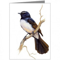 Blank Card, Willie Wagtail
