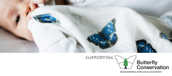 Helping UK butterflies and moths with charity Butterfly Conservation