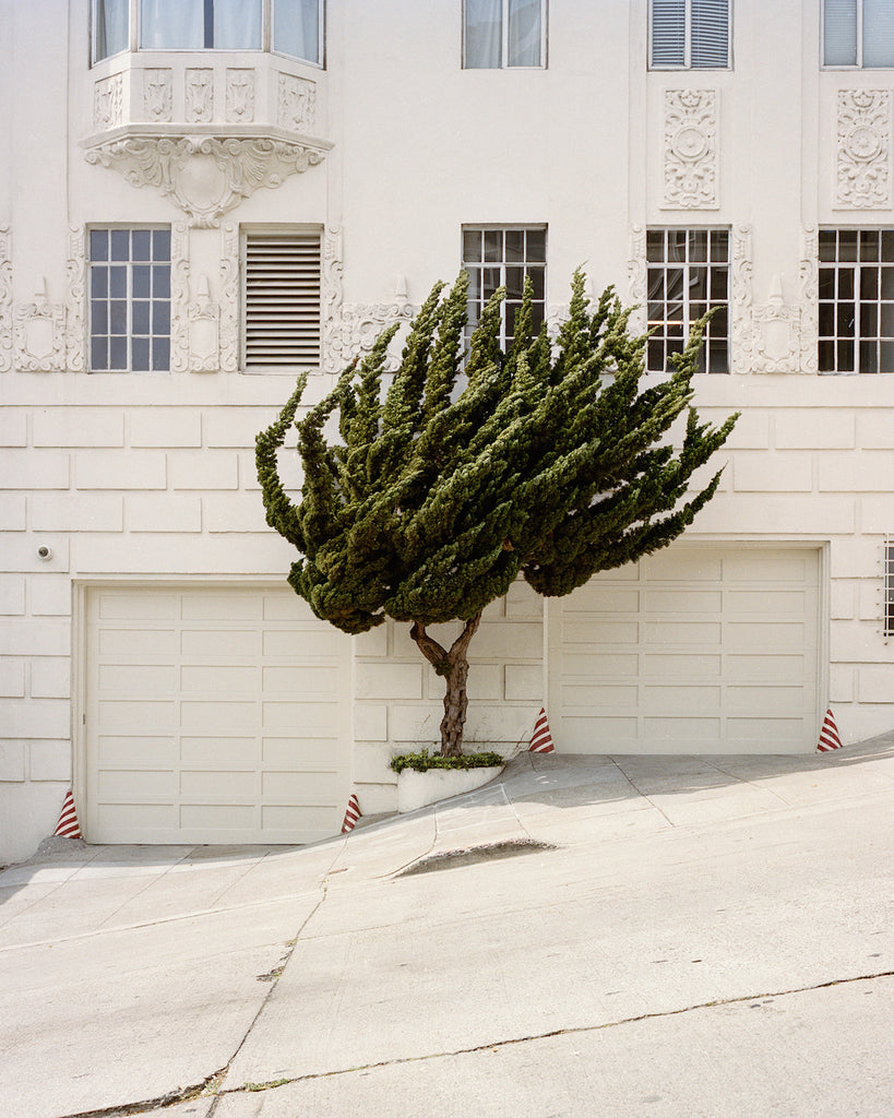 California Topiary by Marc Alcock