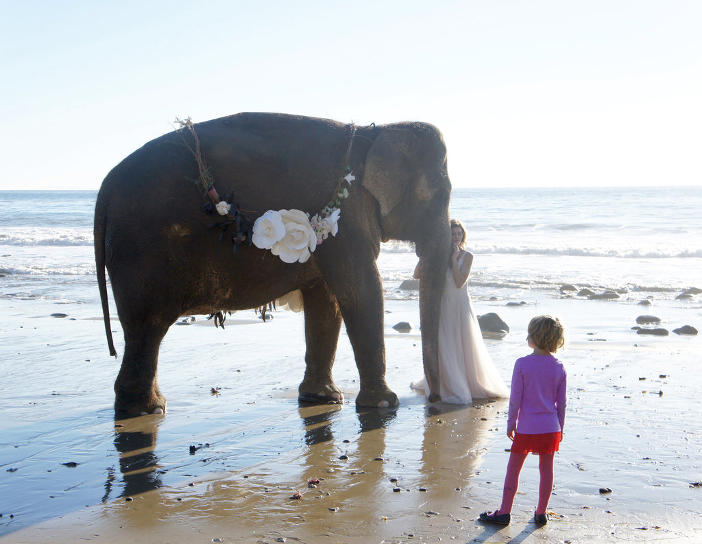 Tai the elephant on the Santa Barbara beach for wedding photo session